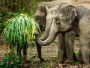 Thailand_Phuket_Elephant Jungle Sanctuary