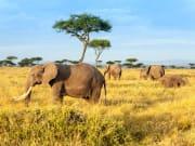 Africa_Kenya_Masaimara_shutterstock_524509258