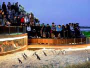 Penguins-Plus-LR