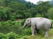 Thailand_Phuket_Elephant Sanctuary Nature Pool