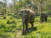 Thailand_Phuket_Elephant Walk Jungle