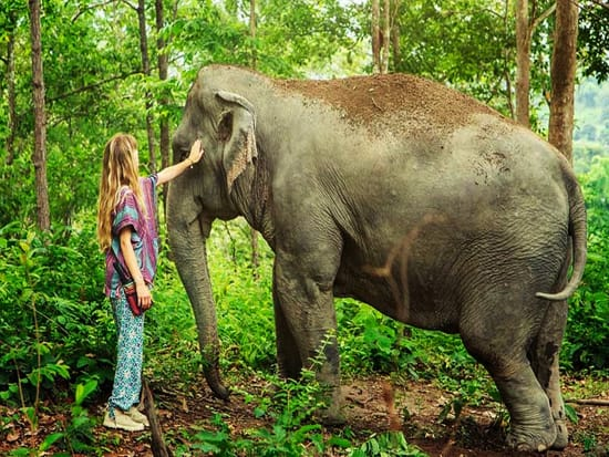 Thailand_Phuket_Walk with Elephants Tour