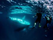 Humpback Whale_6