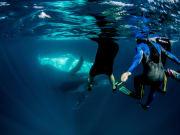 Humpback Whale_5