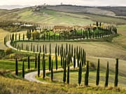val d'orcia, cypress trees
