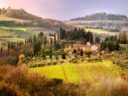 chianti, vineyard, field