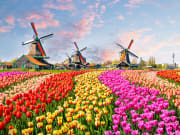 Netherlands_Zaanse Schans_Windmills_Tulips_shutterstock_490194529