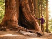 California_San Francisco_Redwoods