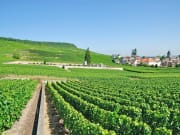 France_Wine-Region_123RF_18275651_ML