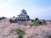 長浜城歴史博物館  (1)