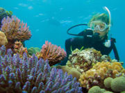 woman scuba diving corals great barrier reef