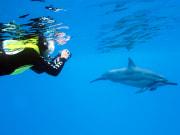 Dolphin-Tour-Hawaii6