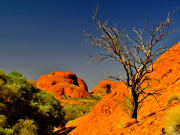 Australia Ayers Rock Uluru Alice Springs Transfer