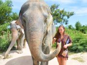 Pattaya Elephant Jungle Sanctuary (1)