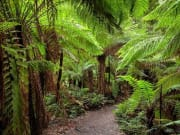 Australia_OtwayNP_shutterstock_1421985404