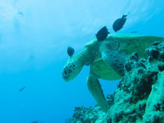 Holokai_Turtle_Canyon_Adventure_Photo