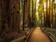 USA_San Francisco_Muir Woods National Park