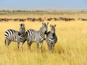 Africa_Kenya_Masai Mara_shutterstock_316593083