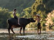 Vietnam_Sapa_child_baffalo_shutterstock_314744768