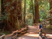USA_San Francisco_California_Muir Woods