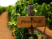 USA_Napa and Sonoma Valley_Wine tasting_pinot noir