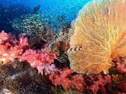 Similan Islands Snorkeling Phuket