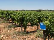 France_Provence_Vineyard_123RF_64578721_ML