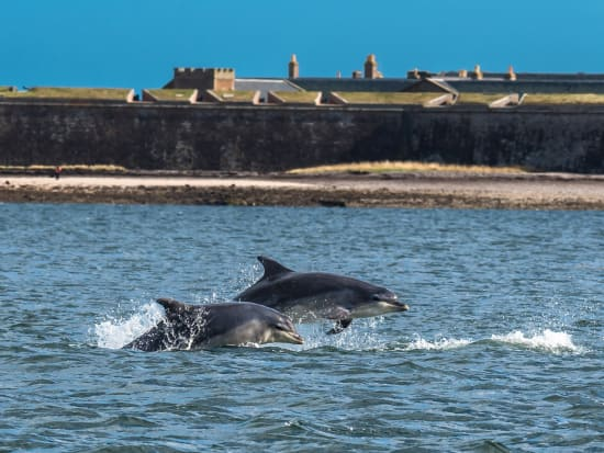 Bottlenose Dolphin, The Moray Firth