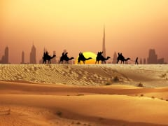 UAE Dubai Desert Sunset Camel Ride
