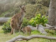 Australia Wildlife Park Kangaroos