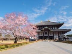Japan_Nara_Todai-ji_Cherry_blossom_sakura_shutterstock_424460758