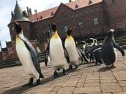 ペンギン・城2