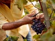 Vineyard Yarra Valley
