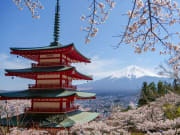 Chureito Pagoda and Mt. Fuji in the spring