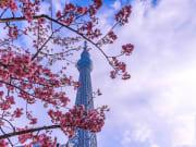 Skytree-Spring_shutterstock_588944699