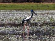 Kakadu National Park Birdlife