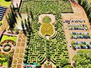 Plantation_shutterstock_1357341797