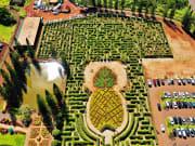 Hawaii_Oahu_Haleiwa_Dole_Plantation_shutterstock_1357341785