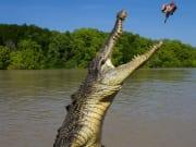 Jumping Crocodiles Adelaide Australia