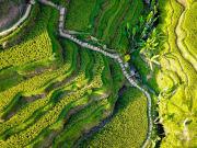 Indonesia_Ubud_RiceTerrace_shutterstock_1554300122