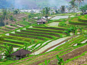 Indonesia_Bali_Jatiluwih_shutterstock_1543139261