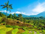 Indonesia_Bali_Jatiluwih_shutterstock_461569882