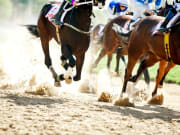 Horse Racing on Track