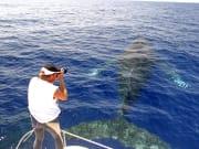 whale photographer copy