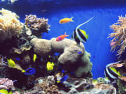 usa_california_monterey bay aquarium
