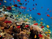 Bali Nusa Lembongan Coral Reef