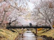 Oshino Hakkai during cherry blossom season