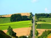 Japan_Hokkaido_furano_shutterstock_40118914
