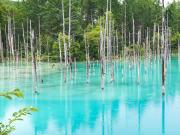 Hokkaido_Biei_Blue_Pond_shutterstock_720662332 (1)