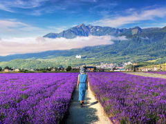 Japan_Hokkaido_Furano_Lavender_shutterstock_461799649